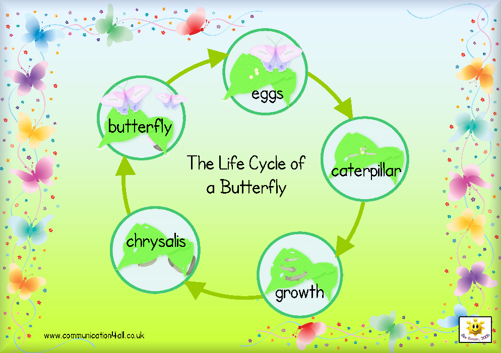 Life Cycle of a ButterflyButterfly Life Cycle