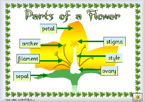 Flower Card on Parts Of A Plant  Wordsearch For The Iwb